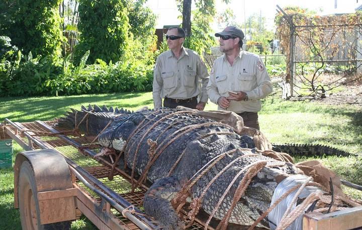 Los guardias veteranos John Burke y Chris Heydon habían intentado capturar al enorme cocodrilo por cerca de una década.