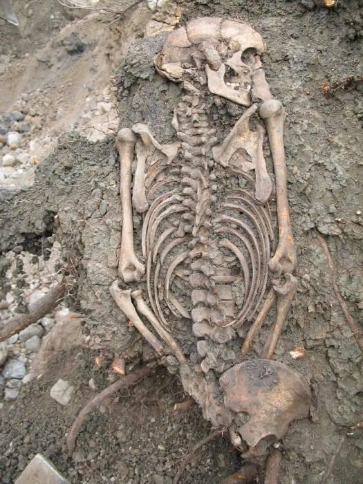 Uno de los esqueletos analizados.