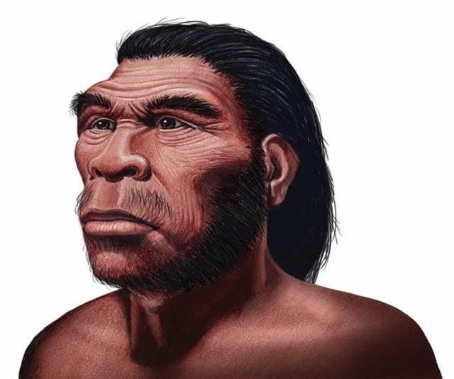 Homo habilis. Vivió hace 2,5 millones de años. Su cráneo era más redondeado y su cara, más corta y achatada. Fue el primer ser vivo que usó una herramienta con la intención de conservarla y mejorarla.