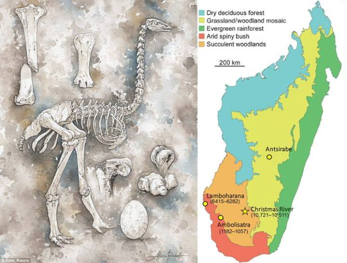 Izquierda: osamenta y huevo de un ave elefante. Derecha: vegetación en el Madagascar del Holoceno.