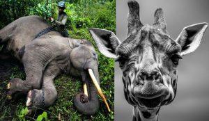 """Alerta por la biodiversidad, la ONU: """"Nos arriesgamos a la sexta extinción masiva"""""""