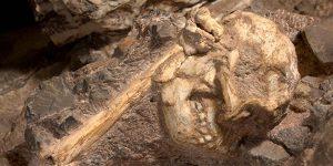 Nuevas especies de homínidos pueden haber sido encontradas en Sudáfrica