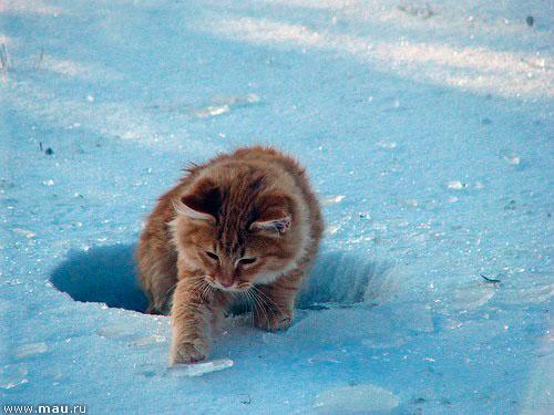 CATS-галерея - Котоарт - Фото и картинки кошек и котят ...