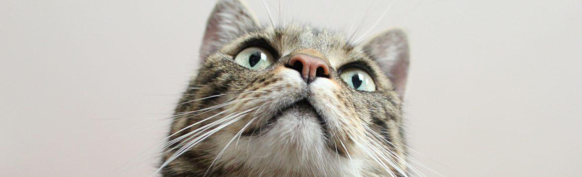Katze guckt über Kamera hinweg: Kosten und Ablauf Beratung zu Verhalten von Katzen, was kostet Beratung
