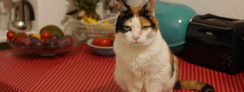 Katze sitzt auf Tisch, dahinter steht Essen