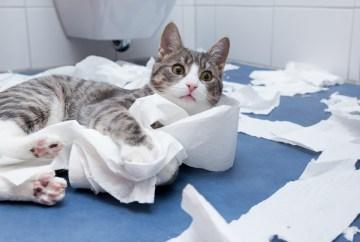 Katze zerstört Klopapier in Badezimmer - Beratung zu unerwünschtem Verhalten, Kratzen, Beißen, Aggression, Unsauberkeit, Markieren, Unruhe, nächtlichem Wecken, Miauen, Tapete, Sofa, Möbel zerkratzen