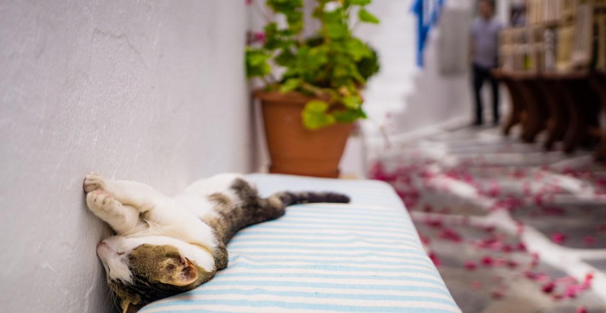 Katze liegt entspannt - Beratung zu Auslastung, Problemen, unerwünschtem Verhalten, Kratzen, Unsauberkeit, Markieren, Vergesellschaftung, Mehrkatzenhaushalt, Haltung, Spiel, Beschäftigung