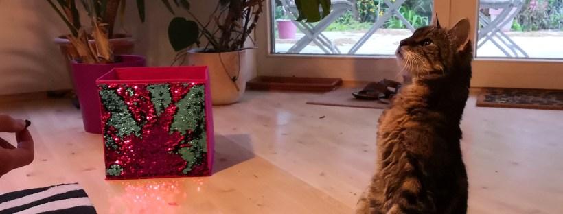 Katze macht Männchen auf Signal.