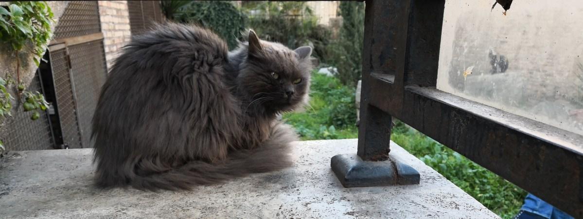 Katze sitzt auf einem Podest und schaut grimmig.