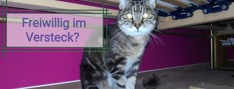 Katze sitzt unter dem Bett, Schriftzug: Freiwillig im Versteck? Katzenberatung in Berlin, Katzenverhaltensberatung, Desensibilisierung, Sozialisierung, ängstliche Katze, Angststörung, Katzentraining