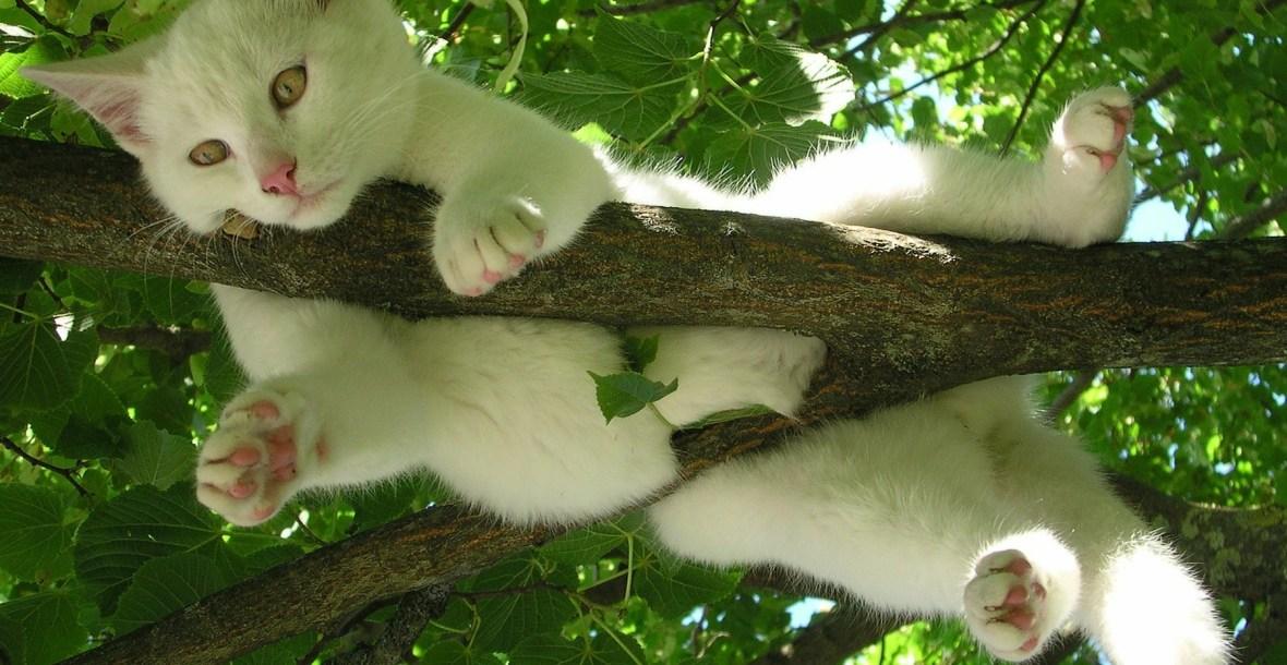 Weiße Katze hängt auf einem Ast in einem grünen Laubbaum - Katzenberatung, Katzenverhaltensberatung, Berlin, Katzenpsychologie, Katzenpsychologin, Katzenpsychologe, Katzentraining, Katzentrainerin