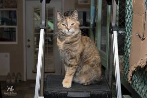 Christina Aguilera, RAPS Cat Sanctuary