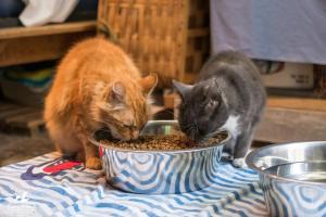 Daniel & Sarah, RAPS Cat Sanctuary
