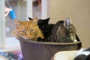 Daniel, RAPS Cat Sanctuary