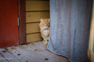 Henrik hiding, RAPS Cat Sanctuary