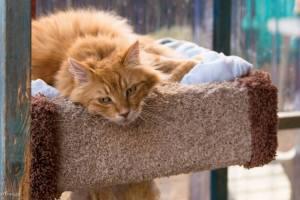 Henrik, RAPS Cat Sanctuary