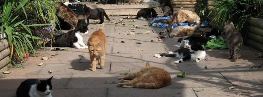 cat sanctuary volunteer