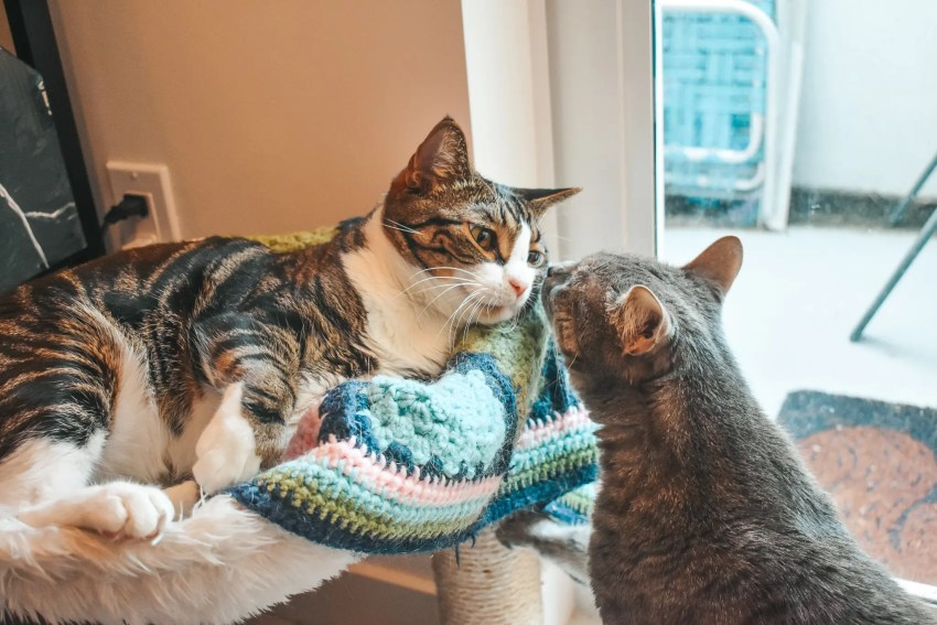 Cat Mom Life: ProDen PlaqueOff Powder for Dental Health -- Louis and Olivia have been using this dental health supplement for some time to great results