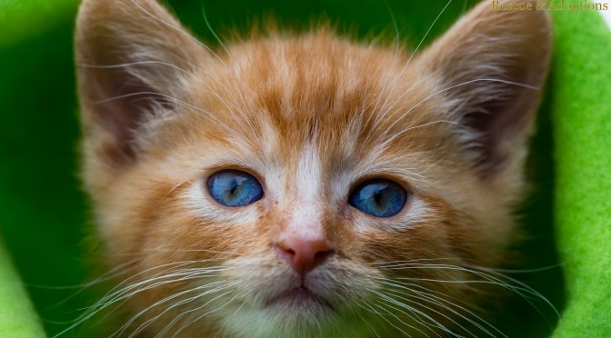 Kittens are looking to graduate from their foster homes