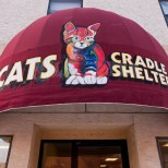 Welcome to Cats Cradle Shelter!