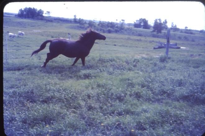 My beautiful pony in Novel progress