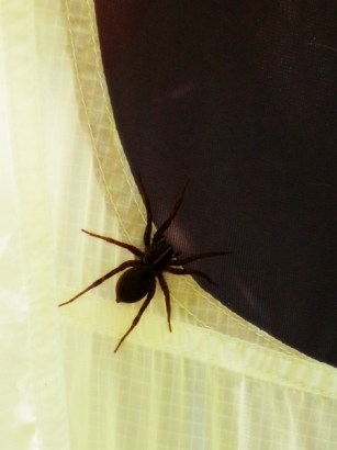 Biggest spider I've ever seen that wasn't in a pet store or a zoo.
