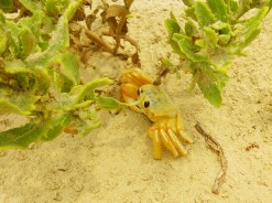 Crabs are cute!