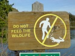 Do not drop rocks on alligator heads.