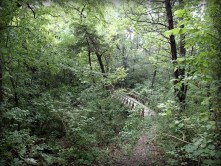 Bridge on Baines Creek Trail