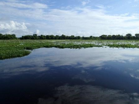 40 Acre Lake