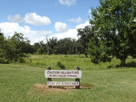 Alligator sign.