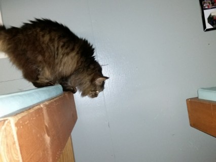 Hostel kitty at Mountain Crossings!
