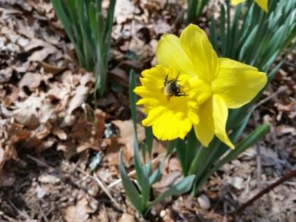 Bee! Somewhere.