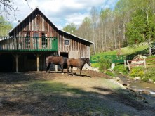Horses at Mountain Harbour B & B.