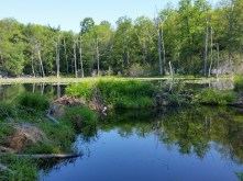 Beaver pond.