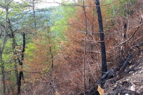 burnt forest