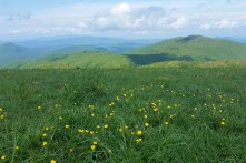 Max Patch