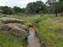 Small creek with boulders and yellow wildflowers around it.