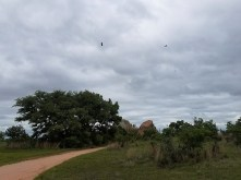 Birds in the cloudy sky above the trail.