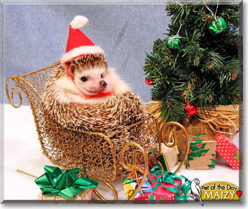 Hedgehogs Suffering Empathy Catself