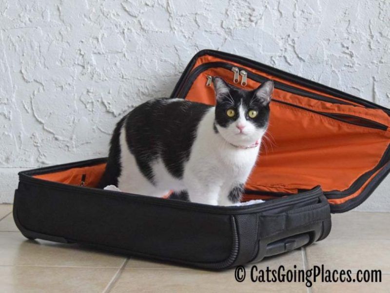 Printable Packing List for Traveling with Cats