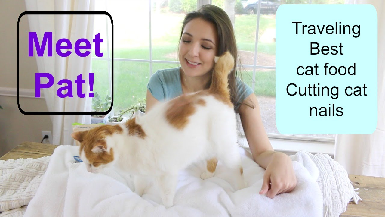 removing cat smell from carpet