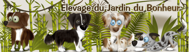 banniere_jardindubonheur_chiens_cauzias