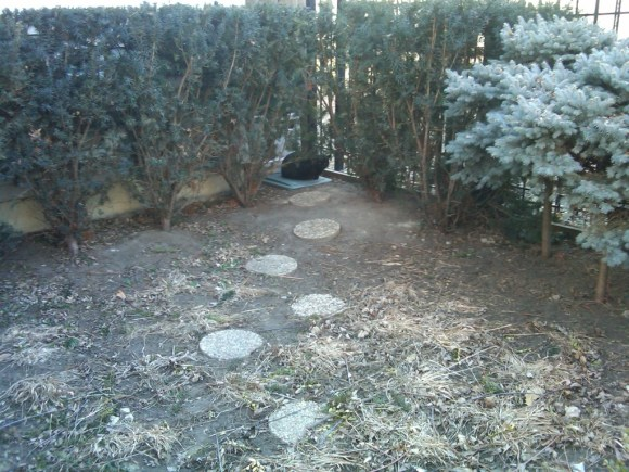 Eartipped cat path.