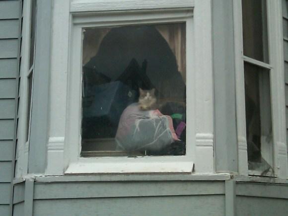Gidget_in_Window