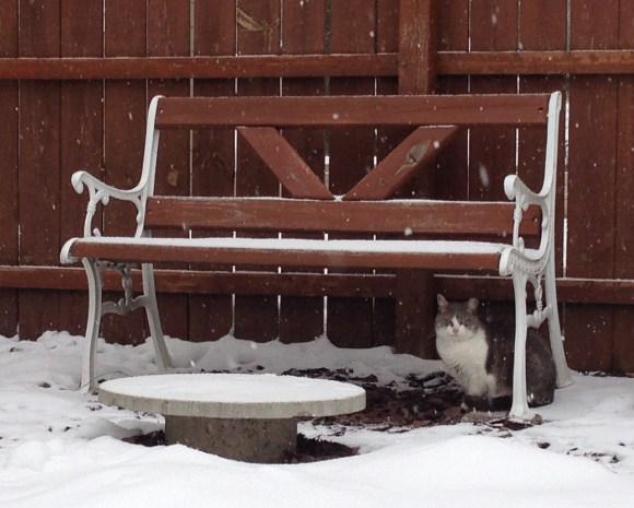 Honey Bouncy Bear stays dry under the garden bench.