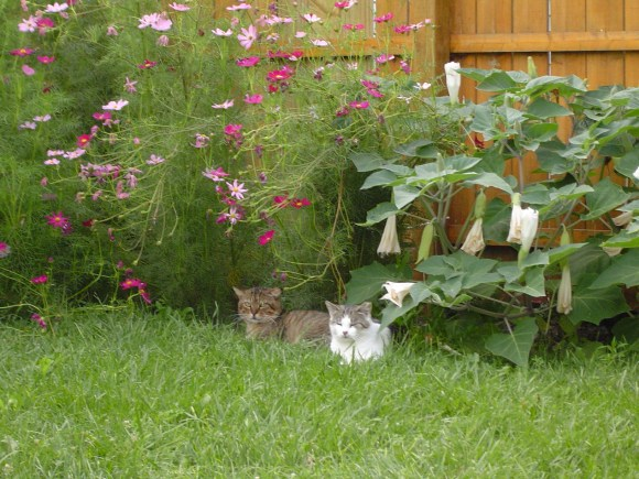 Bobcat and Princess in the garden