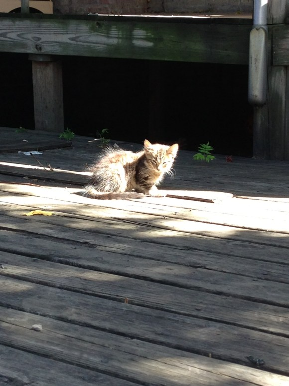 kitten in the sun