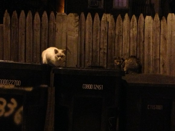 cats on a dumpster