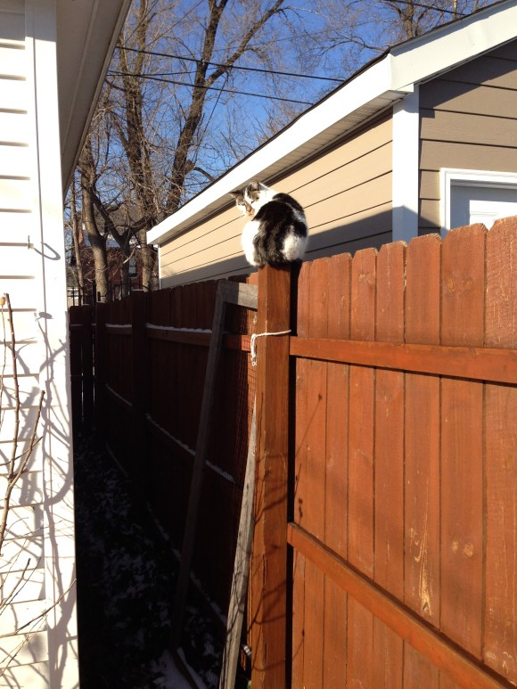 This is how Funny Face checks out the action in the alley while keeping a safe distance.